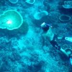 Gili Underwater