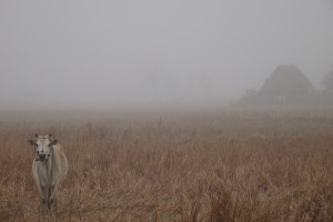 Misty Morning in Luang Nam Tha