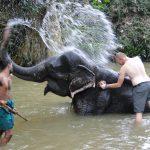 Kandy's Itinerant Elephant Population