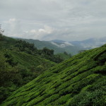 Cameron Highlands Tea Estates