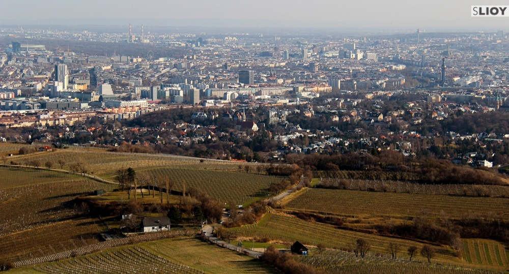 Vineyards and Vienna seen from the Wienerwald.