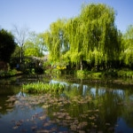 Monet's Garden: Biking to Giverny