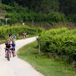 Austrian Wines and Crumbling Castles: A Wachau Valley Bike Tour