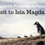 Playing with Penguins in Patagonia: A Visit To Isla Magdalena