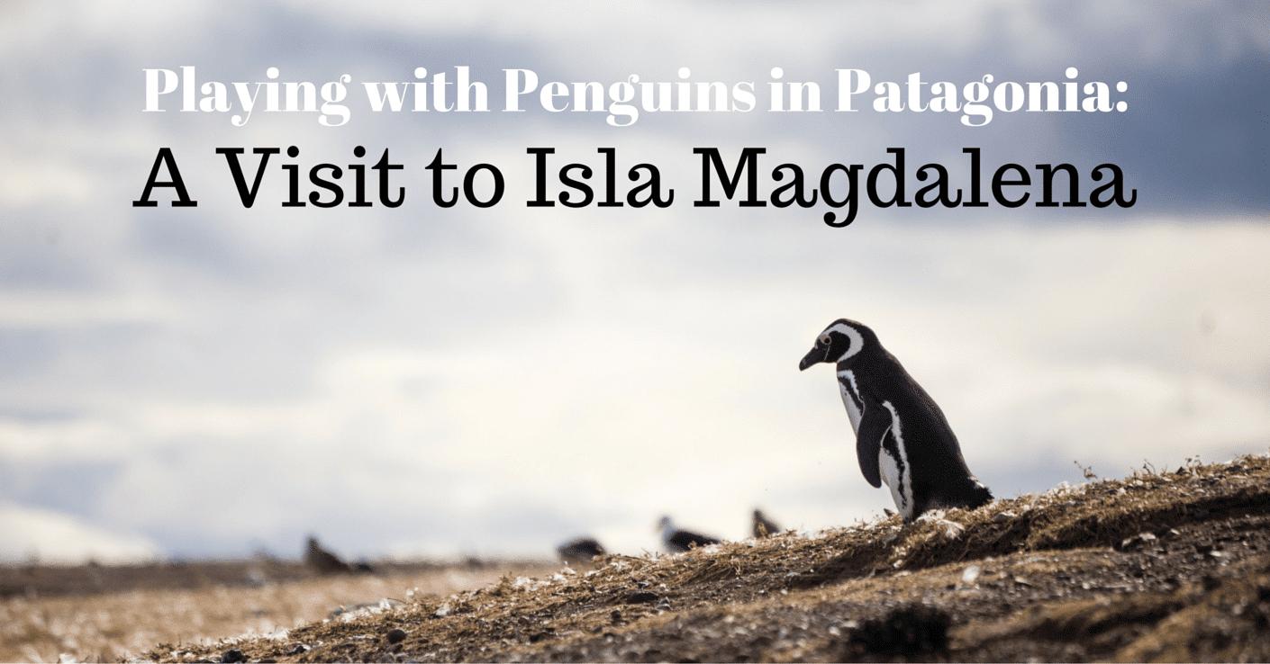 Patagonien Pinguine